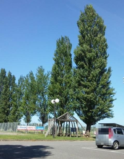 【PickUpSNS】6/5(水) 聖籠アルビレッジの草刈りやります!【クサカリマサオ隊2013】